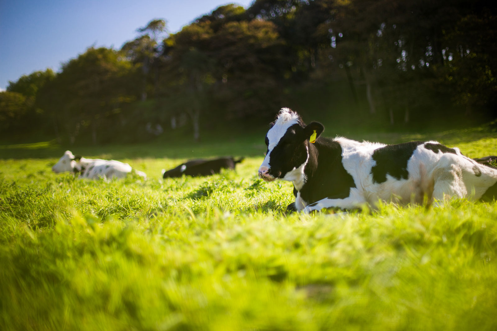 Cows | Veganism & Climate Change: How Going Vegan Can Help