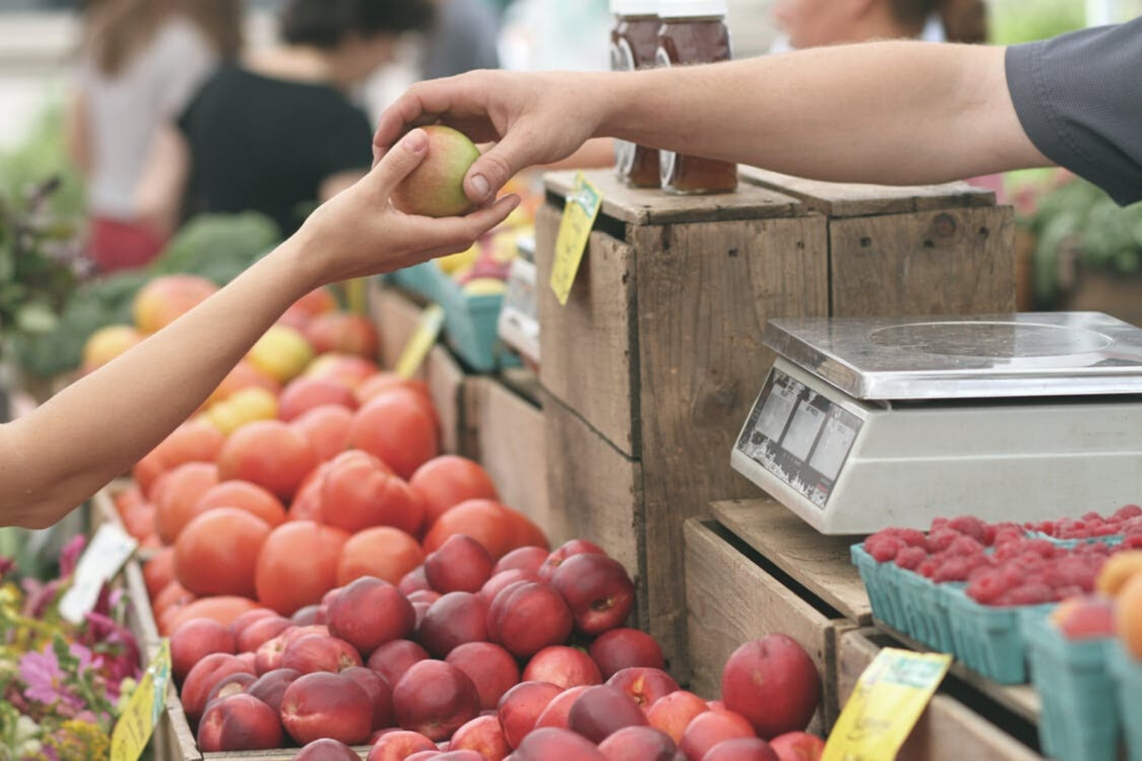 Buying Apples | Creating Your Vegan Grocery List And Meal Plan